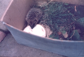 1_Spike the Hedgehog