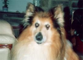 oldpoggydoggy